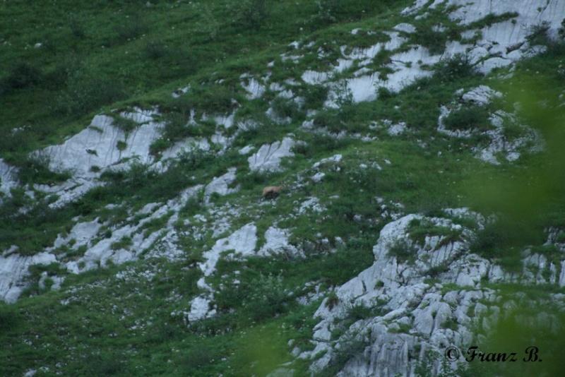 """"""" La haut sur la montagne """" ou, Franz et ses escapades alpines ... Img_4911"""