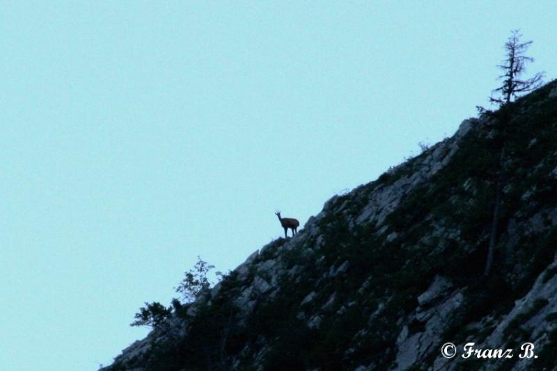""""""" La haut sur la montagne """" ou, Franz et ses escapades alpines ... - Page 2 Img_4912"""