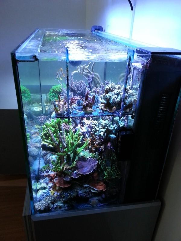 """Présentation de mon aquarium """"caterham"""" - Page 2 20130712"""
