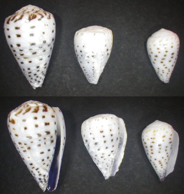 "Cones de Maurice ""Beach"" Imgp0710"