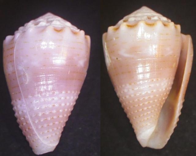 "Cones de Maurice ""Beach"" Imgp0810"