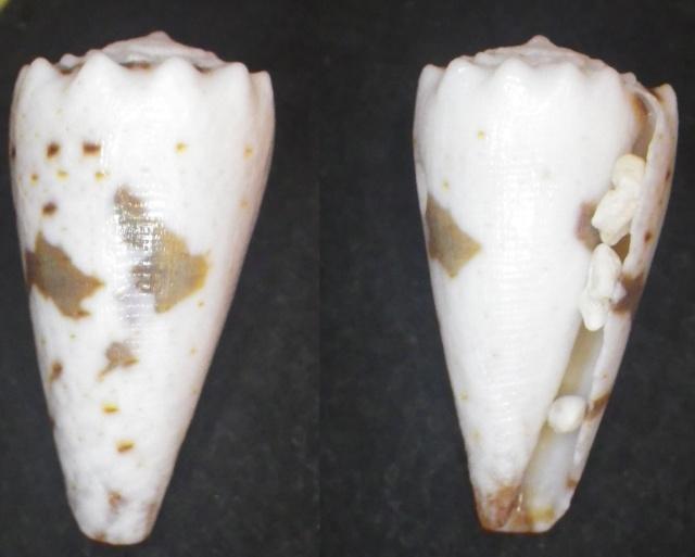 "Cones de Maurice ""Beach"" Imgp0811"
