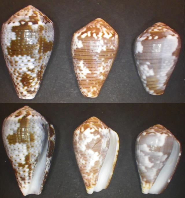"Cones de Maurice ""Beach"" Imgp0812"