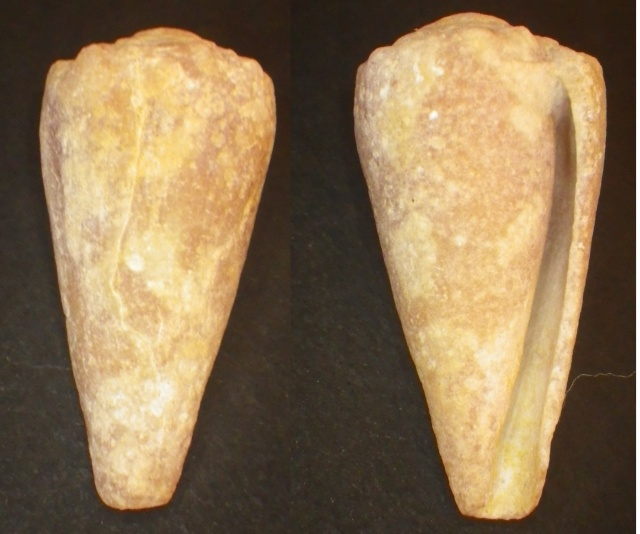 "Cones de Maurice ""Beach"" Imgp0813"
