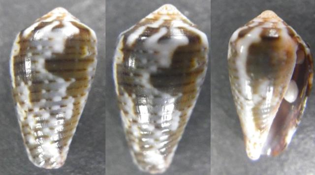 "Cones de Maurice ""Beach"" Imgp0817"