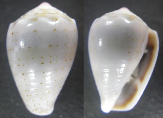 "Cones de Maurice ""Beach"" Imgp0818"