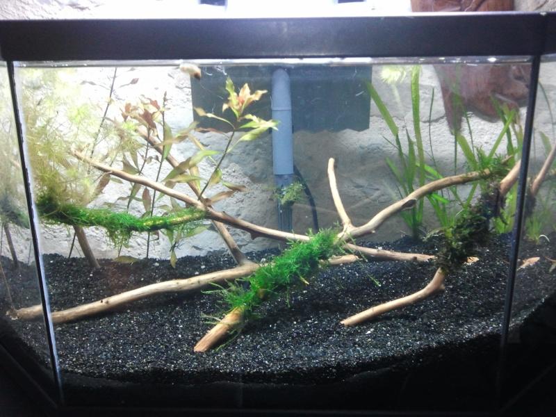 50L spé crevettes  Photo111