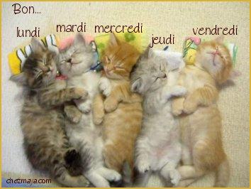 Topic des chats Bonne_22