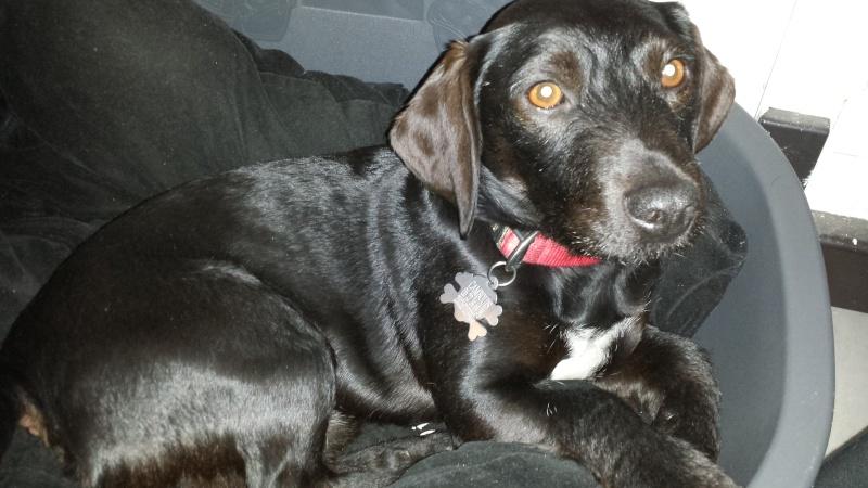 FA recherchée sur le 64 et limitrophes pour petit chien jusqu'à fin août maximum 20140210