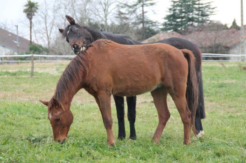 QUICKLY, poney New Forest PP, sauvé par Clémence64 !!!! (Mai 2013) - Page 4 Img_1311