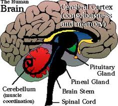 Pineal Gland, Anyone? Images12