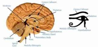 Pineal Gland, Anyone? Images13