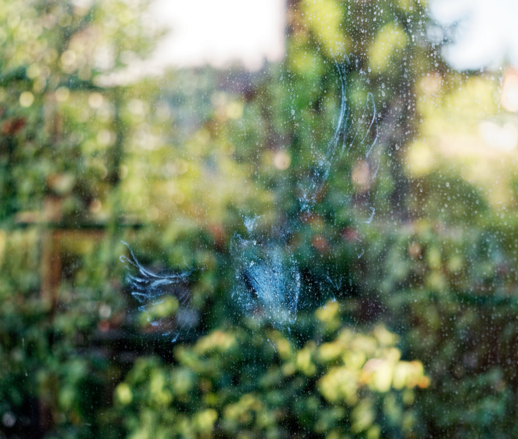 pigeon vitre rencontre P9091311