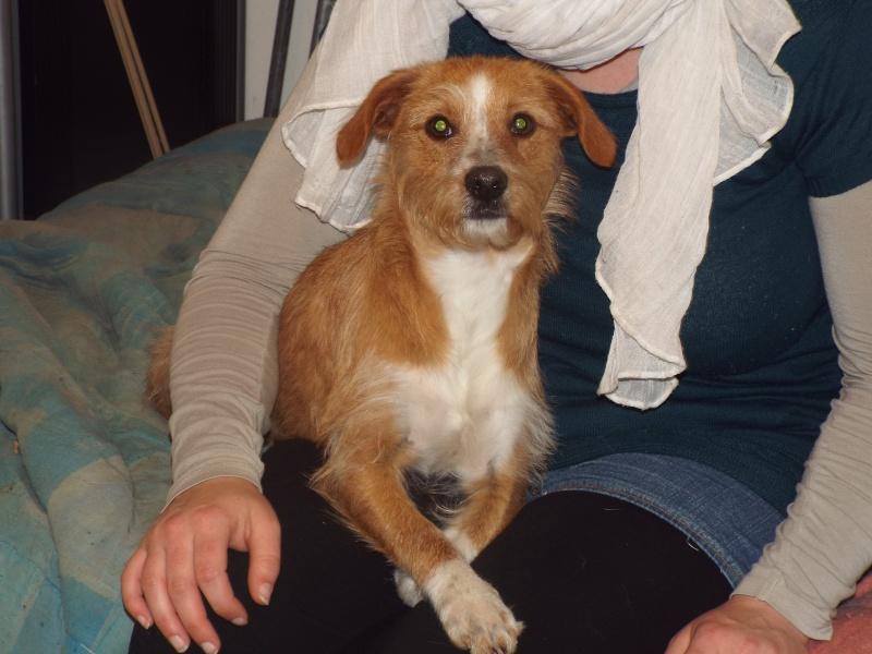 besoin d'une asso pour un petit chien Dscf0914