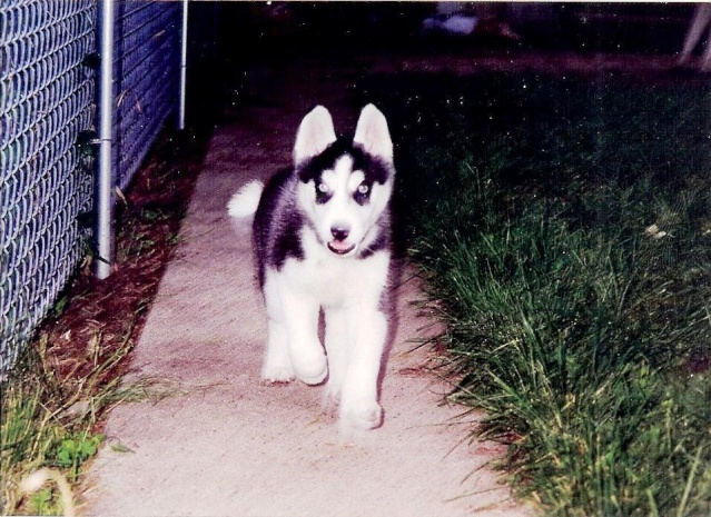 Happy 15th Birthday, Saber! Saber012