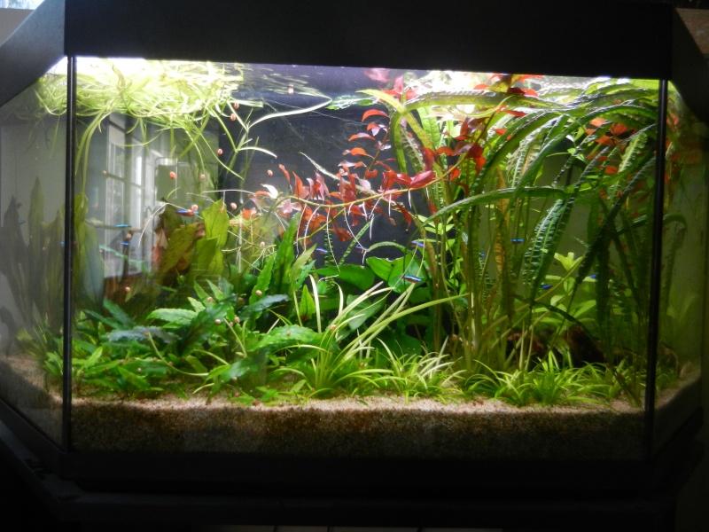 l'aquarium du crestois - Page 4 Dscn2010