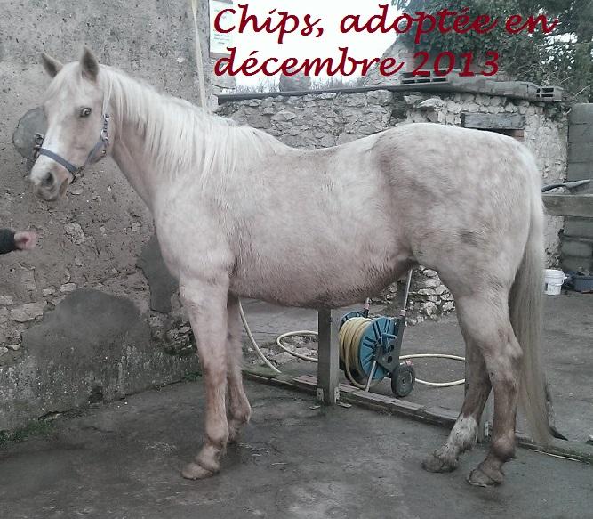 CHIPS - QH PP née en 1995 - adoptée en décembre 2013 par Thierry et Stéphanie 14929011