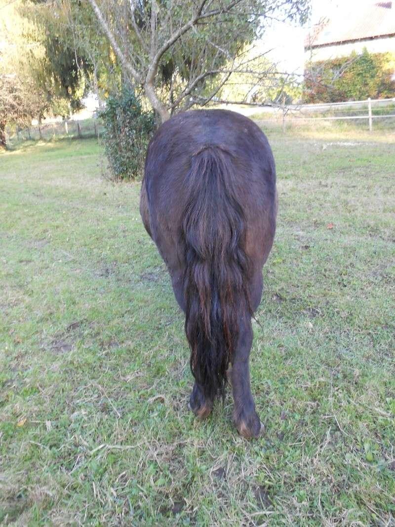 REGLISSE - ONC poney typée Shetland née en 2000 - adoptée en novembre 2013 par Solenn - Page 3 Dscn0112