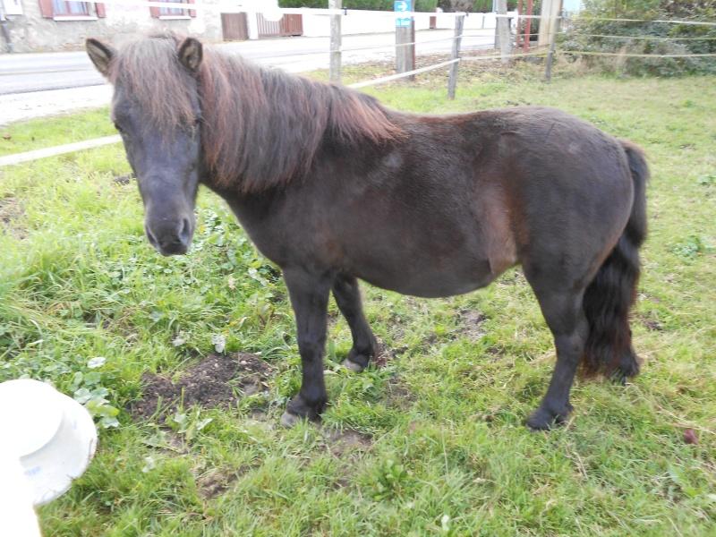 REGLISSE - ONC poney typée Shetland née en 2000 - adoptée en novembre 2013 par Solenn - Page 3 Dscn0115