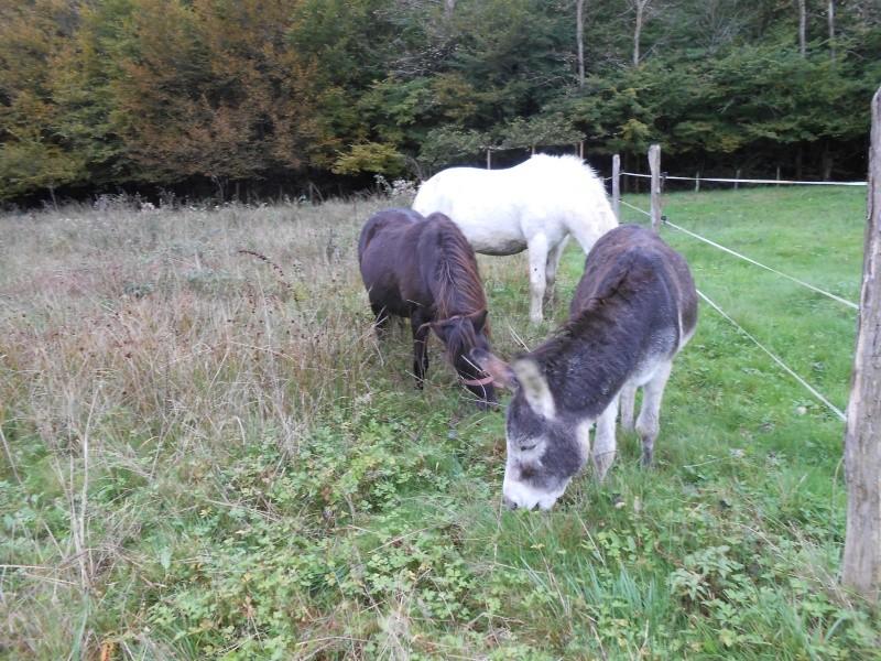 REGLISSE - ONC poney typée Shetland née en 2000 - adoptée en novembre 2013 par Solenn - Page 3 Dscn0212