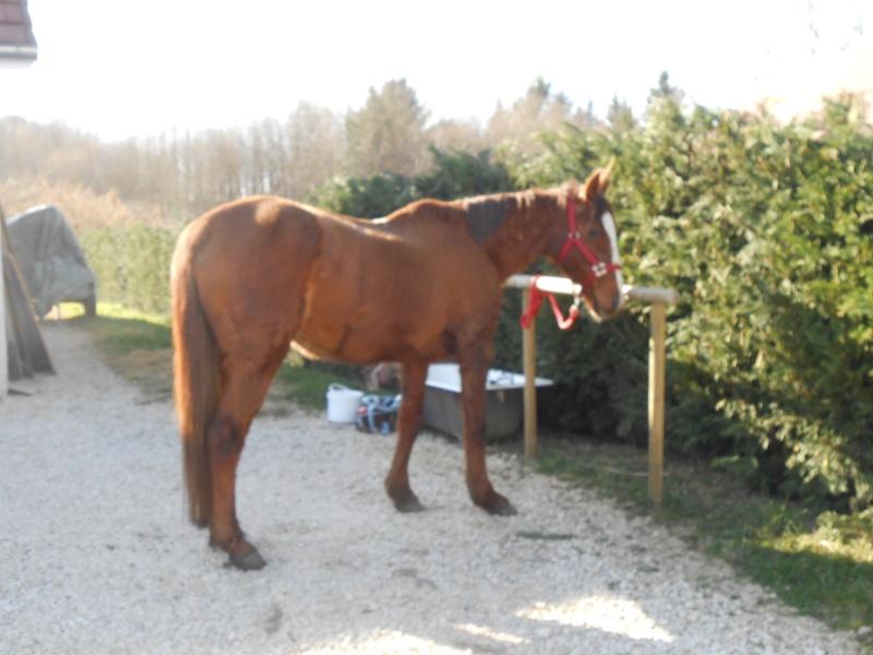 LORETTE - ONC selle née en 1998 - adoptée en mars 2014 par galatéwouindy Dscn1010