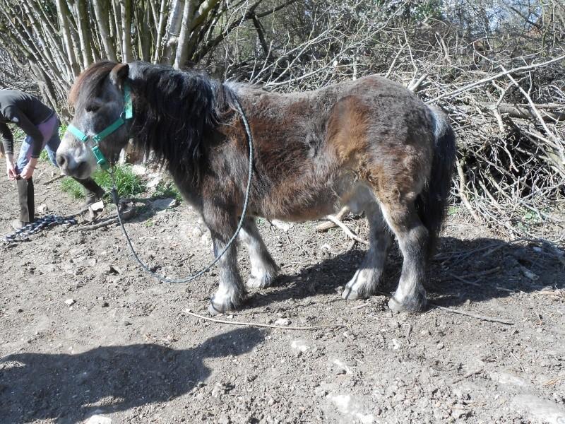 OURAGAN - Poney Shetland né en 1991 - adopté en juillet 2009 par malik70 Dscn1127