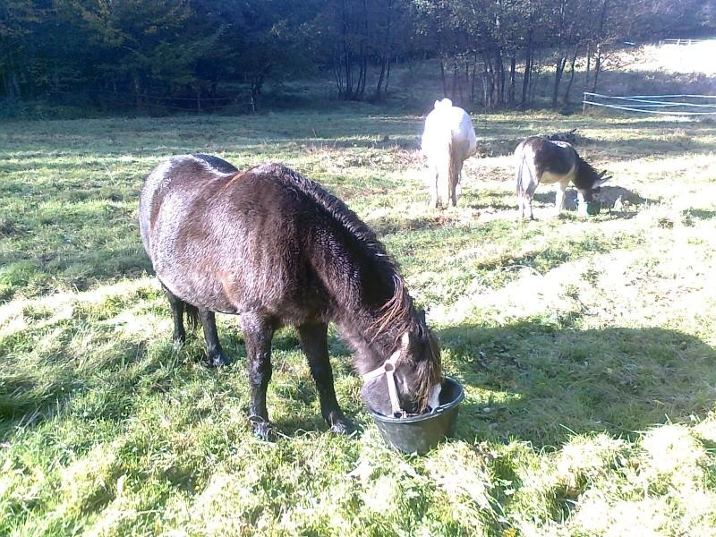 REGLISSE - ONC poney typée Shetland née en 2000 - adoptée en novembre 2013 par Solenn - Page 3 Photo110