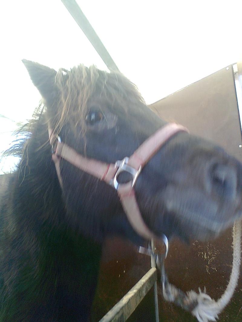 REGLISSE - ONC poney typée Shetland née en 2000 - adoptée en novembre 2013 par Solenn - Page 3 Photo111