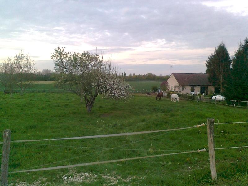 LORETTE - ONC selle née en 1998 - adoptée en mars 2014 par galatéwouindy - Page 3 Photo197