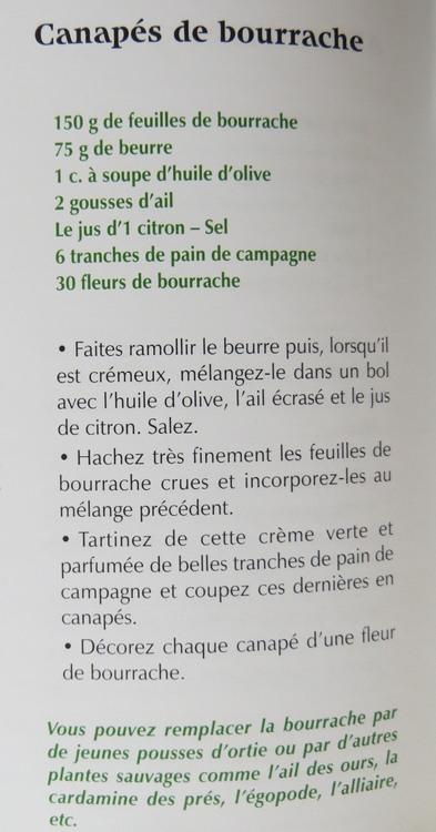 bourrache. Img_1321
