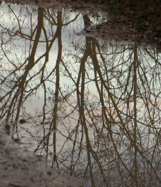 36 - Les reflets dans les flaques d'eau !!! - Page 2 Img_1330