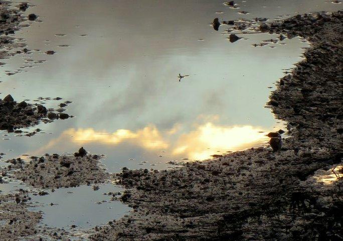 36 - Les reflets dans les flaques d'eau !!! - Page 2 Img_1331