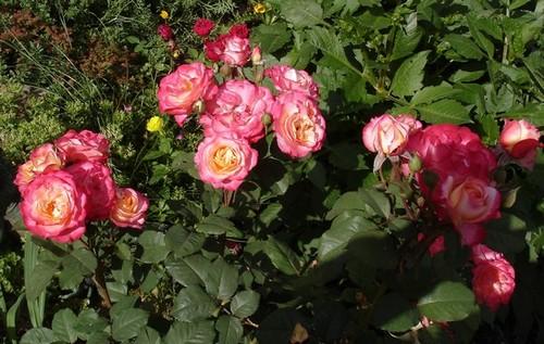 Marseille en fleurs Marsei10