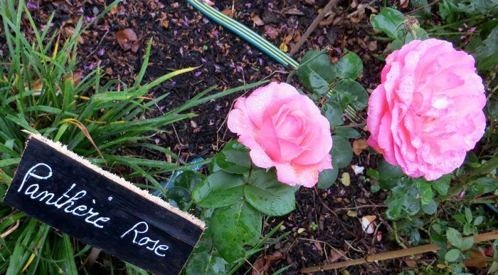 rosa panthère rose - Page 2 Pantha10