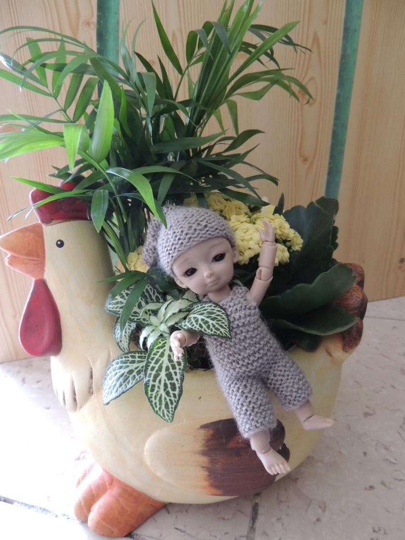 bébés hujoo et petites fairy : nouvelles photos - Page 2 Dscn1810