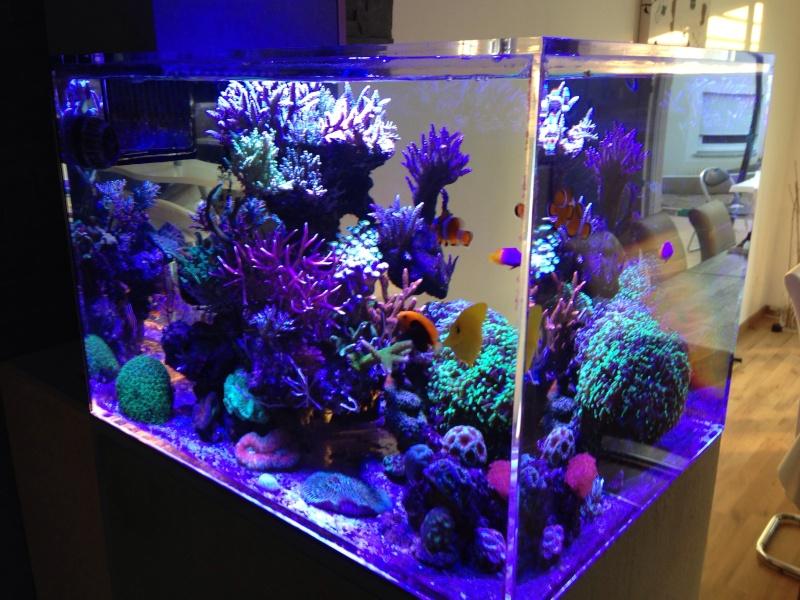 Unjall Acrylic Reef, mon petit récif (scolymia p.8) Image10