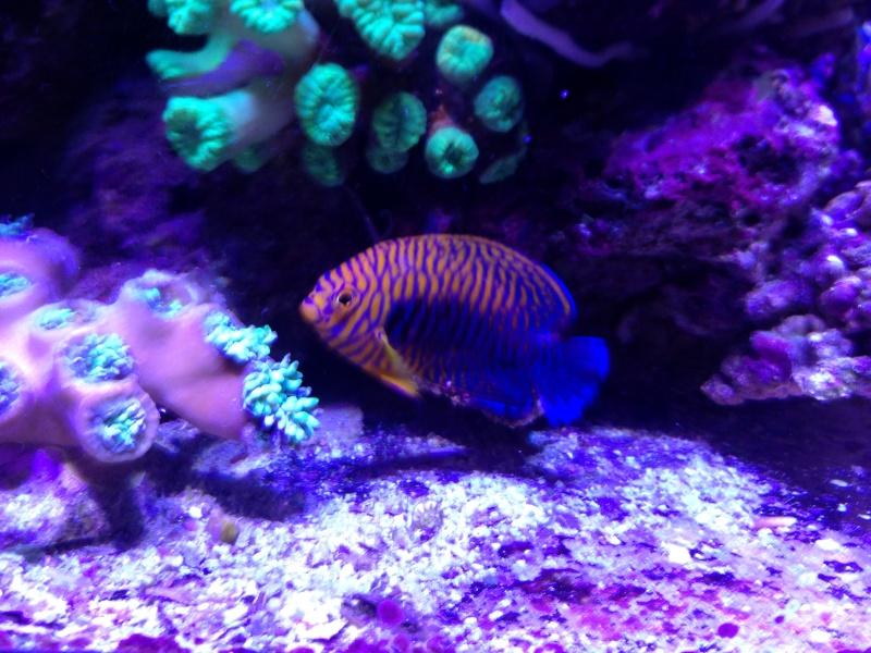 Unjall Acrylic Reef, mon petit récif (scolymia p.8) Image12