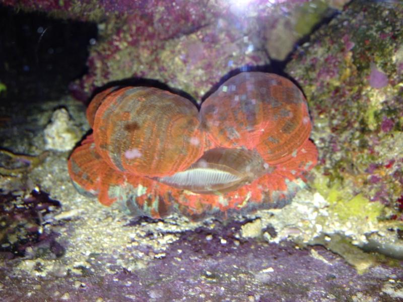 Unjall Acrylic Reef, mon petit récif (scolymia p.8) - Page 4 Image47