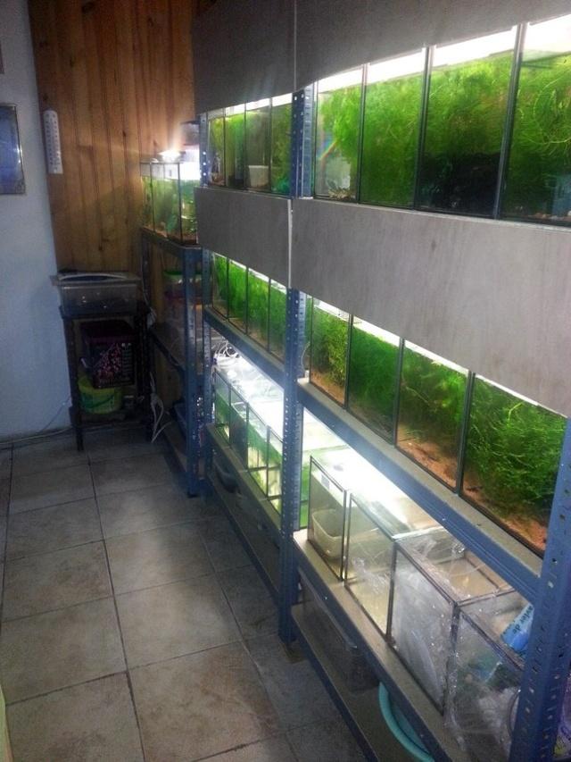 ma pièce à poissons,crevettes et écrevisses. 20140130