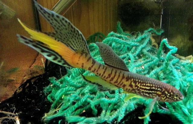 ma pièce à poissons,crevettes et écrevisses. 20140320