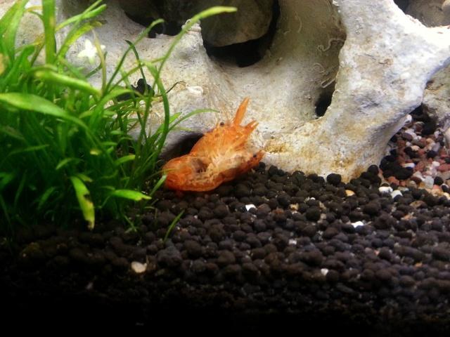ma pièce à poissons,crevettes et écrevisses. 20140510