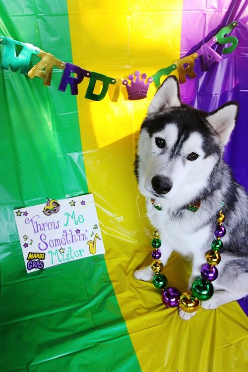 HOTM Chat - March: Mardi Gras Img_3310