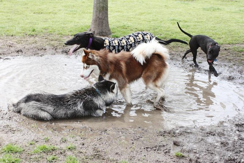 Mud, Muddy, Muddiest Img_3510