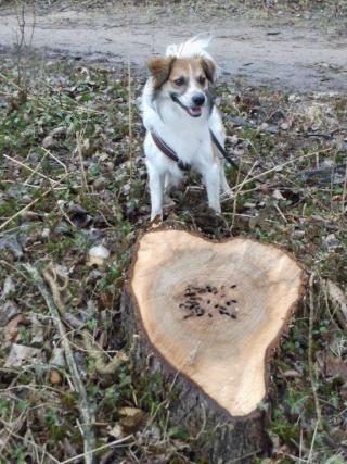 Vorstellung der Herzenshunde 03_710