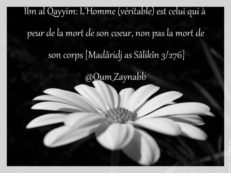 Montage d'Oum Zaynab n°25 10