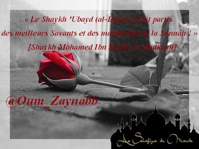 Montage d'Oum Zaynab n°9 54495910