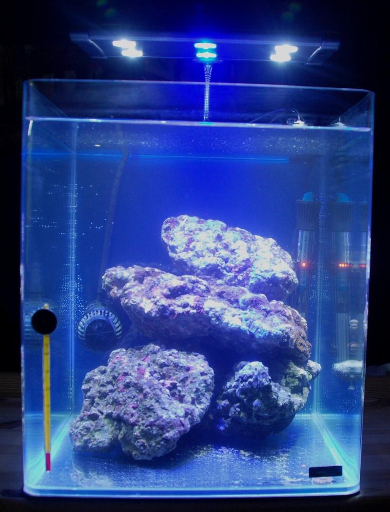 Mon Nano Récif 30 litres - Passage AquaMedic Blenny P.10 Dsc_0010