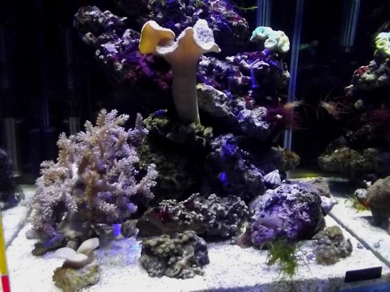 Mon Nano Récif 30 litres - Passage AquaMedic Blenny P.10 - Page 6 F1010