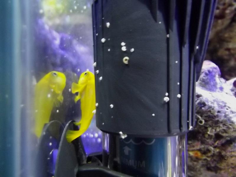 Mon Nano Récif 30 litres - Passage AquaMedic Blenny P.10 - Page 6 F910