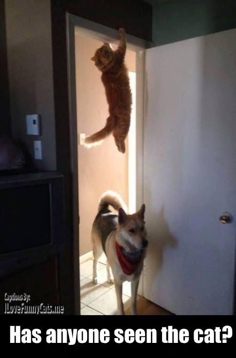 Les meilleures photos humour/tendresse animaux!  10142510